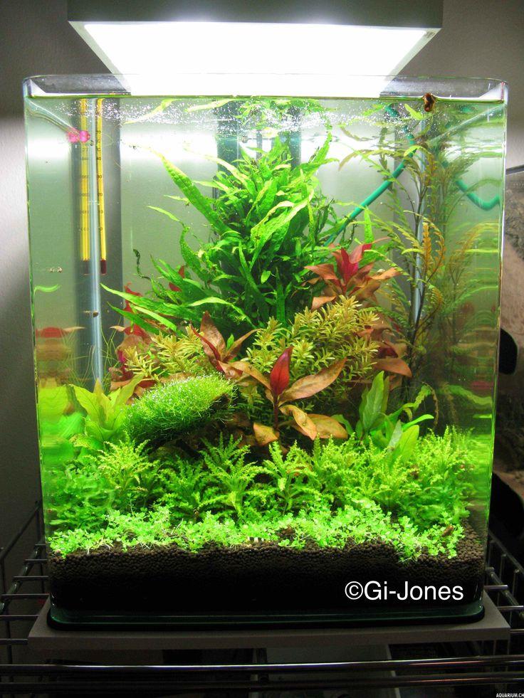 601 best images about aquascape on pinterest underwater for Garden aquarium design