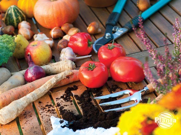 Nawozy organiczne