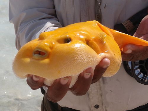 Mango fish!! I dunno why this is sooo funny to me. FOLKS. I THINK I HAVE FOUND MY SPIRIT ANIMAL