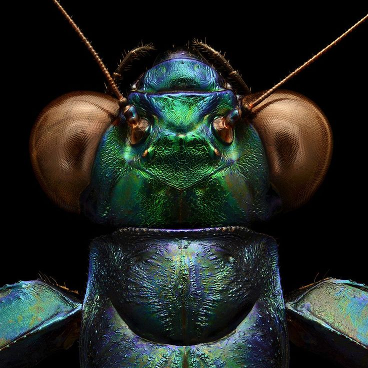 Best 生物昆虫 Microscope Images On Pinterest Insects - Each of these macro bug photographs is made from thousands of individual images