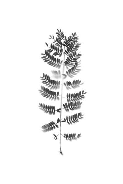 10 x de leukste, stoerste en strakste zwart-wit prints (via Bloglovin.com )
