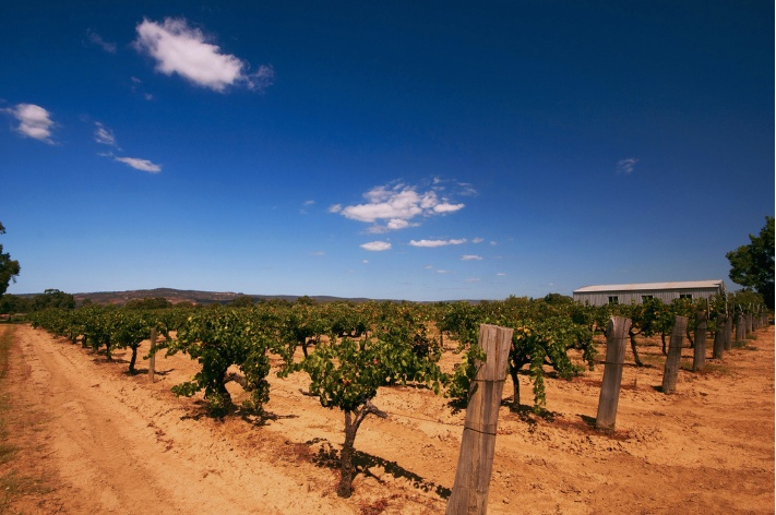 Swan Valley / Western Australia.  Wine yards Swan Valley by Elliott Keene