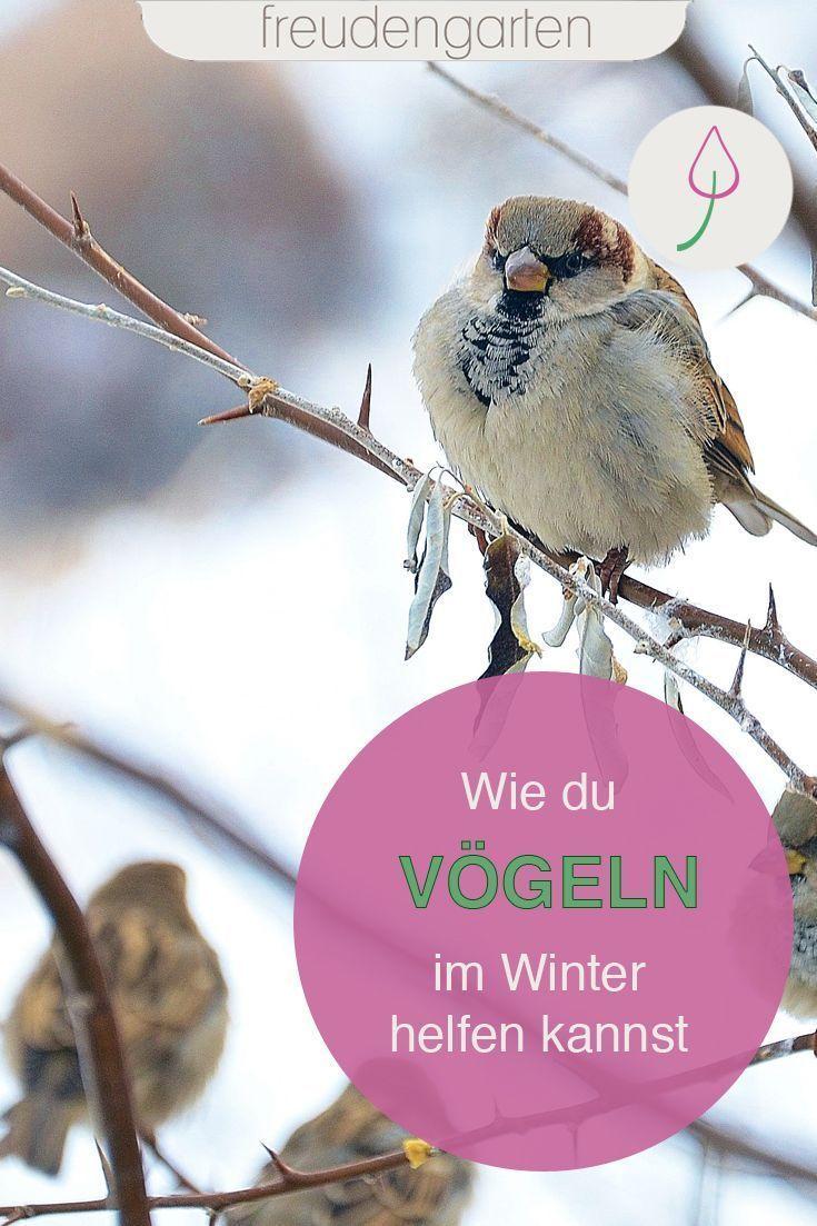 Pinterest Deutschland Vogel Im Winter Blumenbeet Anlegen Gartenthema