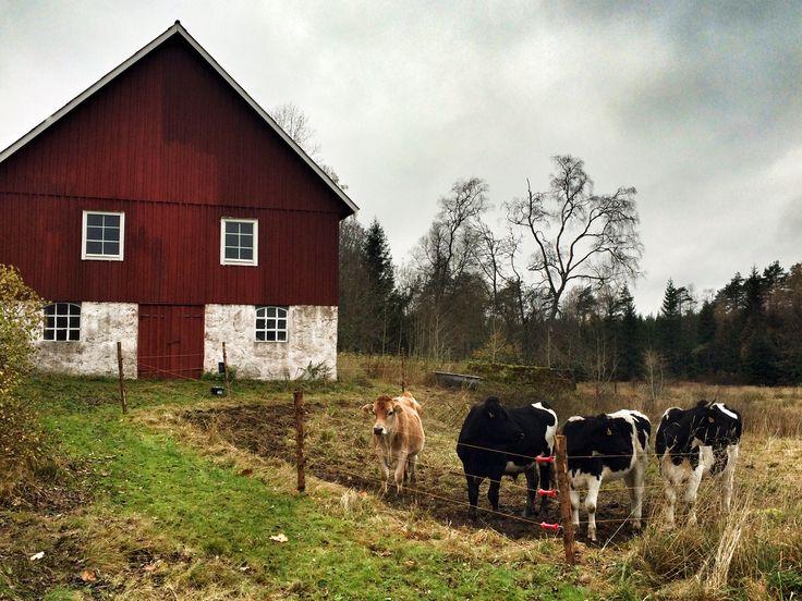 Fall in Gunnalt, Sweden