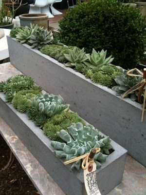Succulents in concrete window boxes. Pinned to Garden Design - Pots & Planters by Darin Bradbury.