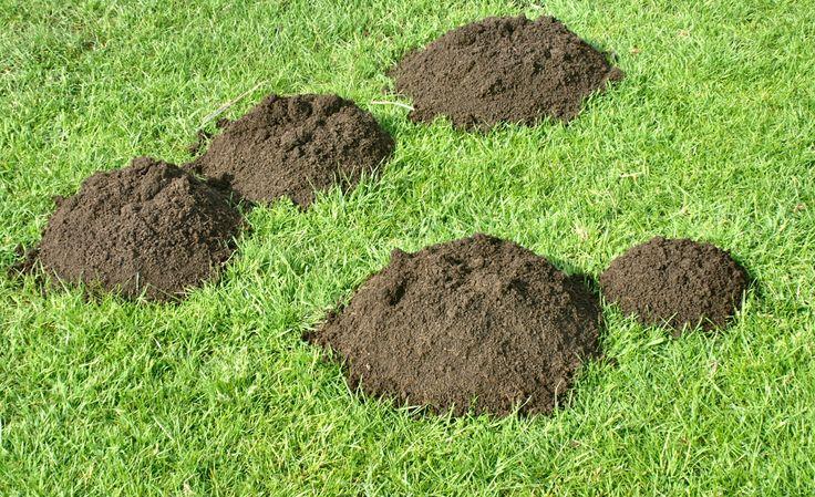 A legjobb megoldások vakond ellen! Így űzheted el a vakondokat a kertedből!
