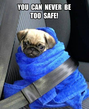 As snug as a pug in a rug!