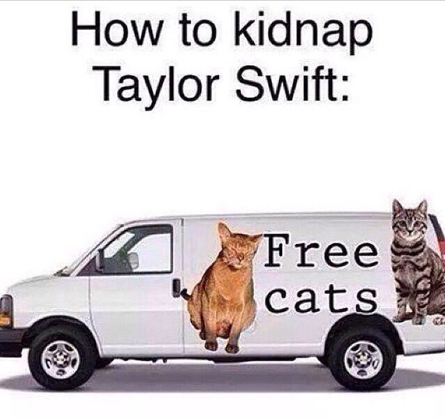 Ok Swifties, we all meet and get a bunch of cats in a van and drive around New York until we find Taylor. Who's with me!?!