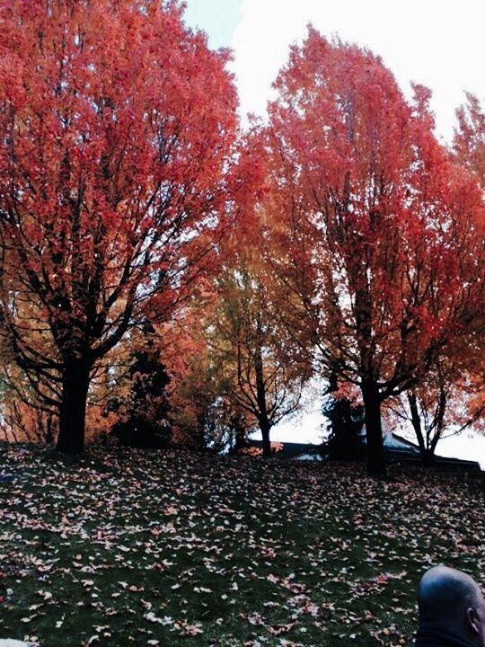 Beautiful Whistler in fall