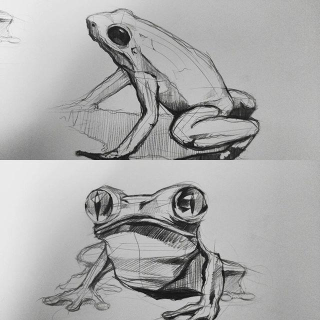 개굴개굴 개구리 frog sketches by sangjoon park #doodle #doodles #art #illust…
