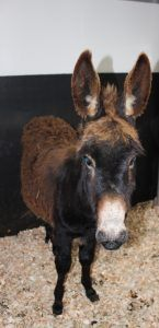 The good news channel: Roma the Donkey Rescued from Treacherous Bog http://tracking.feedpress.it/link/9167/7732319?utm_content=bufferebff0&utm_medium=social&utm_source=pinterest.com&utm_campaign=buffer