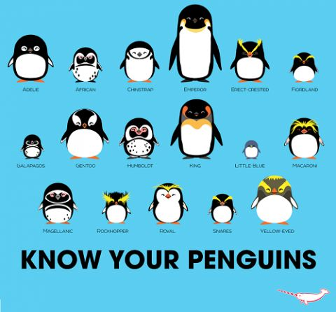 Know Your Penguins guide by Peppermint Narwhal.