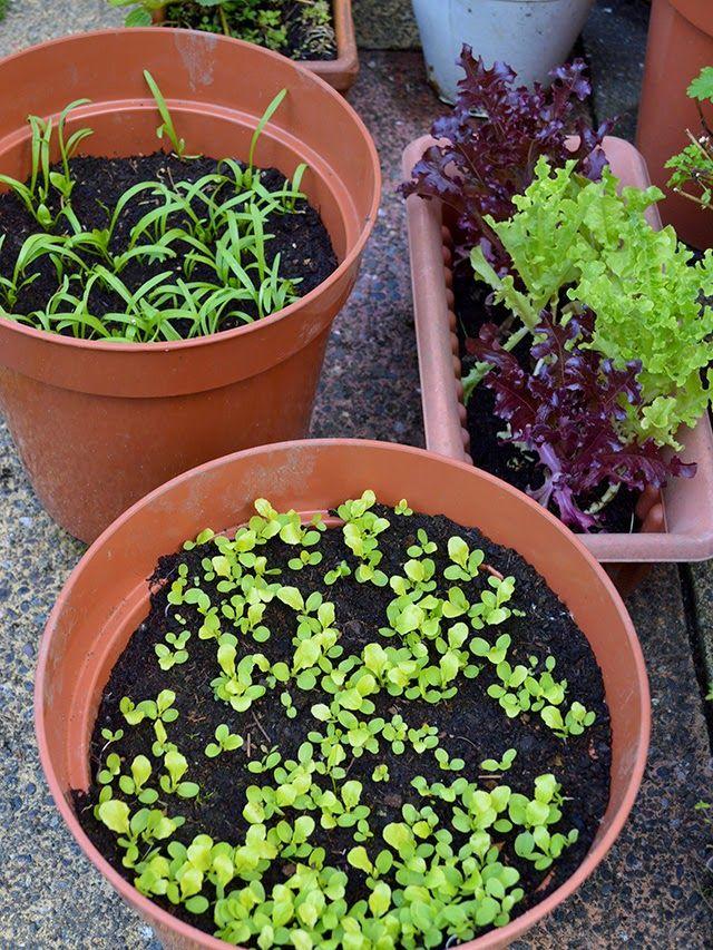 15 groenten die je kan groeien in de herfst ~ Lovely Greens   The Beauty of Country Living