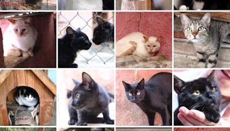 Após venda de sítio, ONG busca lar para animais em SP