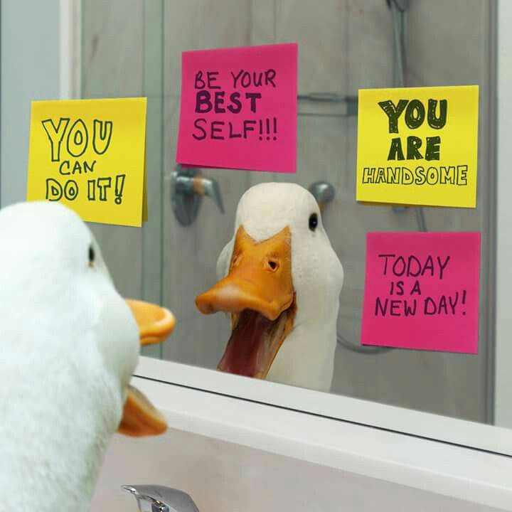 marketing communications aflac duck campaign The aflac duck will continue to showcase his funny side, but with a greater focus on serving others, aflac's catherine hernandez-blades tells marketing daily  with every campaign, we offer .