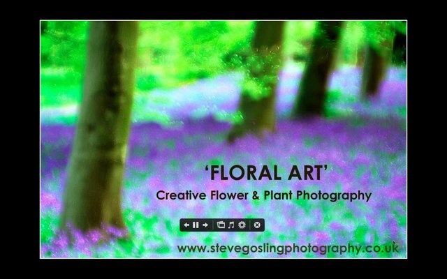 """Steve Gosling presents """"Floral Art creative flower plant photography"""" by MSoX"""