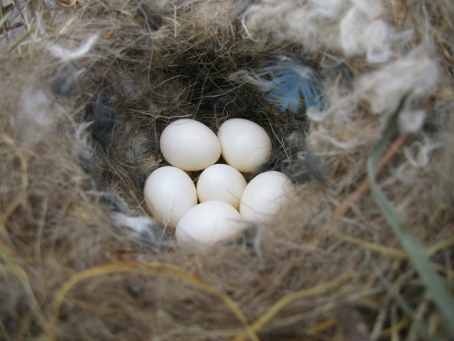 How To Stop Birds Building Nests On Your House