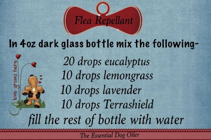 DIY flea repellent made with essential oils - made this for my pups. My version of this recipe: I quadrupled the amount of oils used and added 10 drops of cedarwood and 5 drops of peppermint.  The recipe as is, just left my dogs smelling like wet dogs, I did not smell the oils on them. - Used all Fall 2014 and my dogs did not get fleas, I just sprayed them each time they went out.
