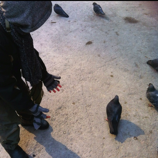 Chase the pidgin!