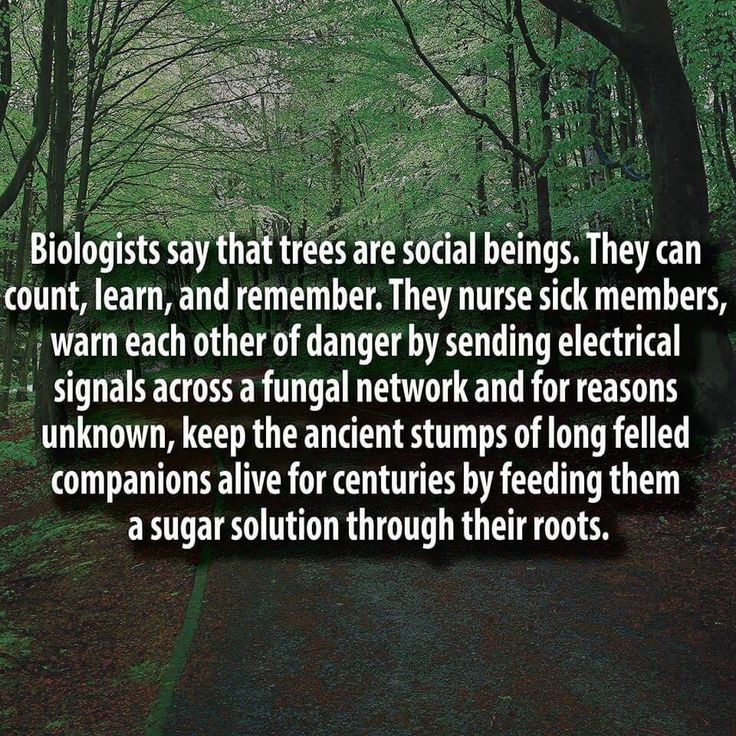German Forest Ranger Finds That Trees Have Social Networks, Too