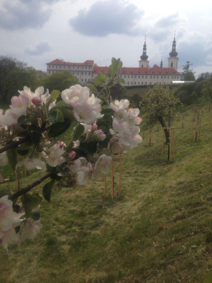 #prague#love#spring#petrin