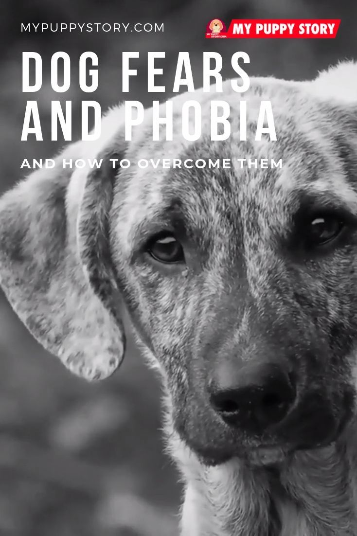 Dog Fears And Phobia And How To Overcome Them Dog Training Dog