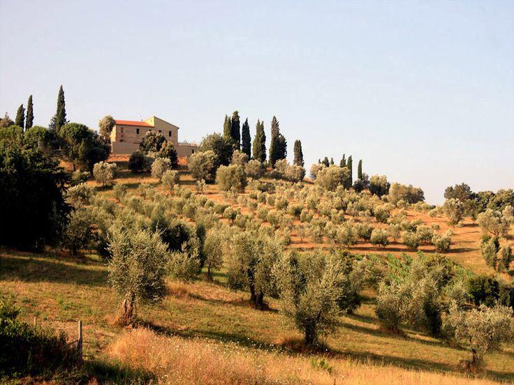 Paysages toscans typiques à la tombée du jour, en Italie