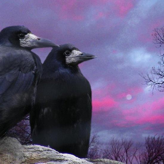 Samhain Ravens against purple skies - Guardian of Ceremonial Magic, Healing, and Transformation.