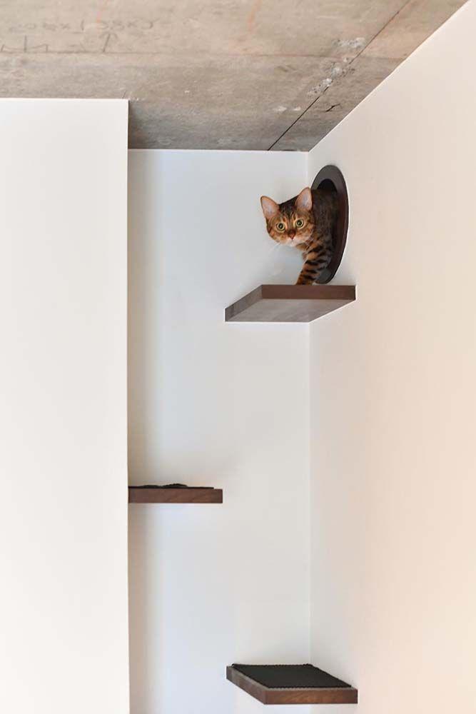 リノベ当時は飼っていなかったが ネコを飼うことを前提に設計 ネコが寝室とリビングを行き来するための通り道を壁の上部に設置した 株式会社 錬 れん ねこ マンションリノベーション 猫 ネコ キャットステップ キャットウォーク リノベり ねこ