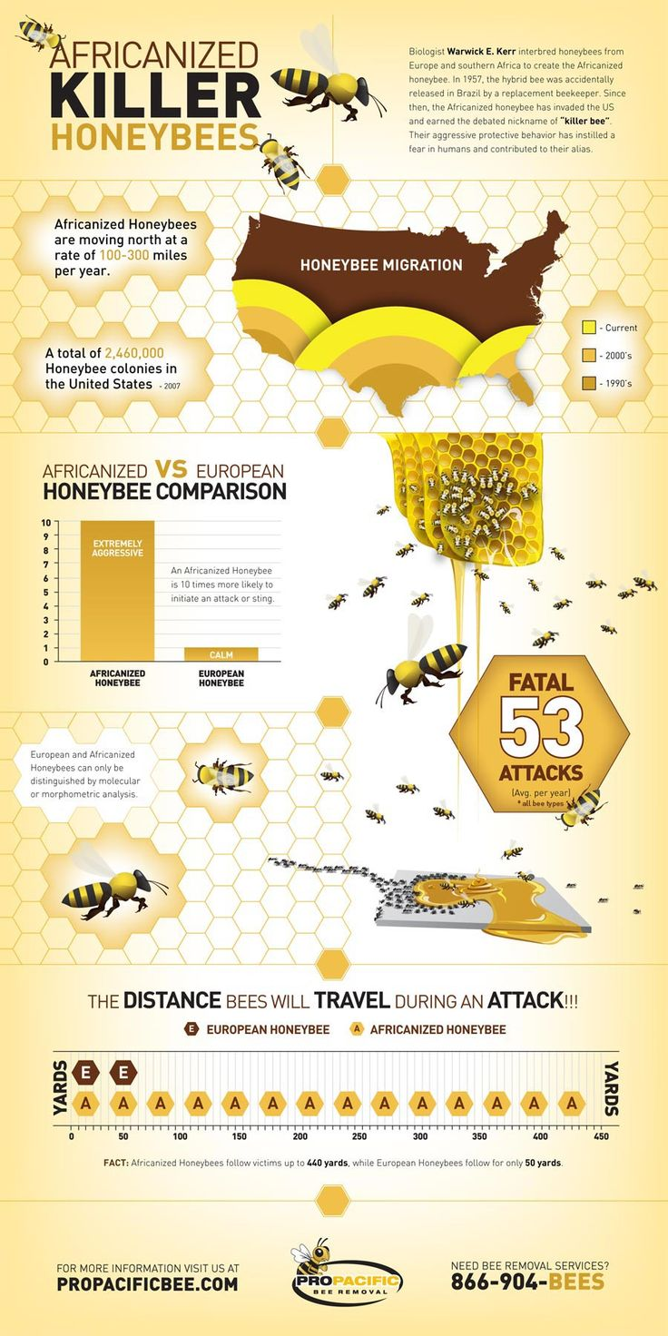 Infographic illustrating the presence & behavior of Killer Bees in the U.S. Full image at http://www.propacificbee.com/infographic/AHB/index.php