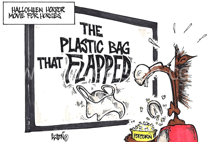 Quotes On Plastic Bags: 1000+ Ideas About Horse Cartoon On Pinterest