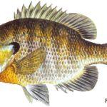 Mesačník Rybárske tipy