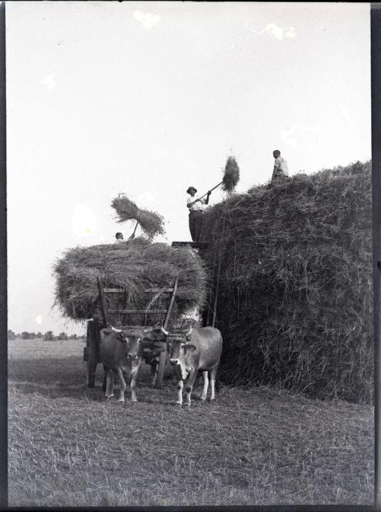 EN IMAGES. Ces photos centenaires sauvées de la poubelle - 17/04/2013 - leParisien.fr La moisson sur le plateau de Saclay entre 1895 et 1905