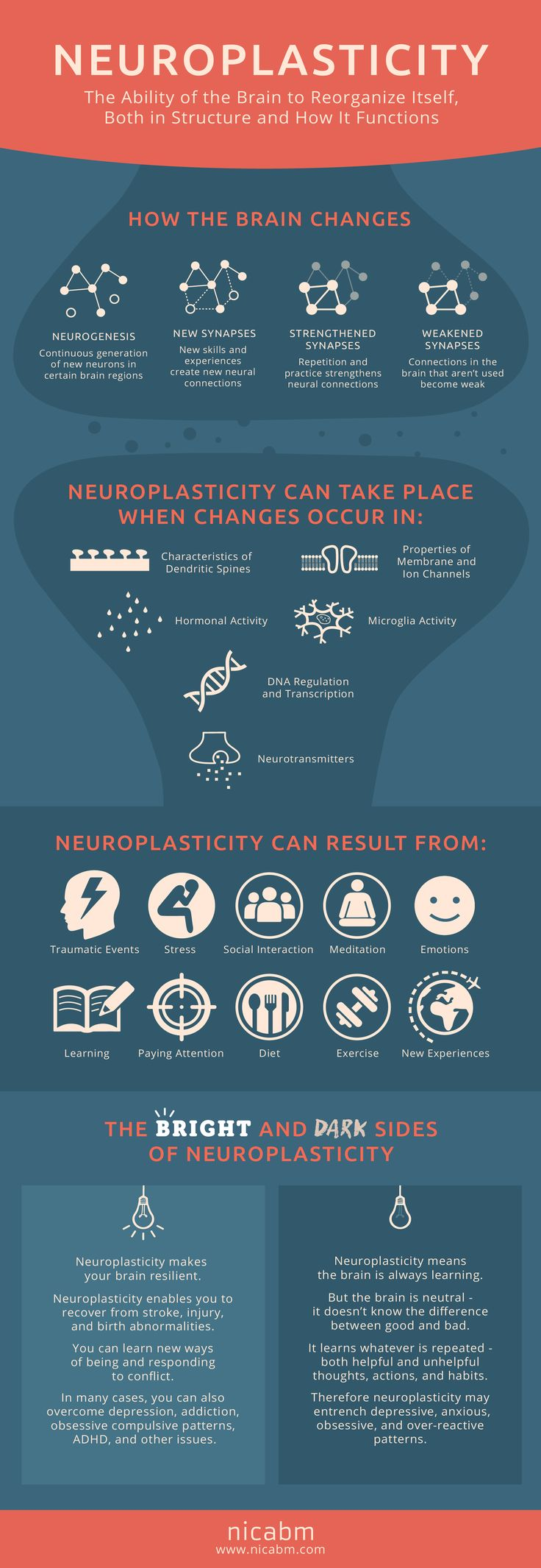 How Does Neuroplasticity Work? #infographic #neuroscience #medicine #neuroplasticity #brain https://plus.google.com/+CaptainJack63/posts/9YEZvqkQYUd