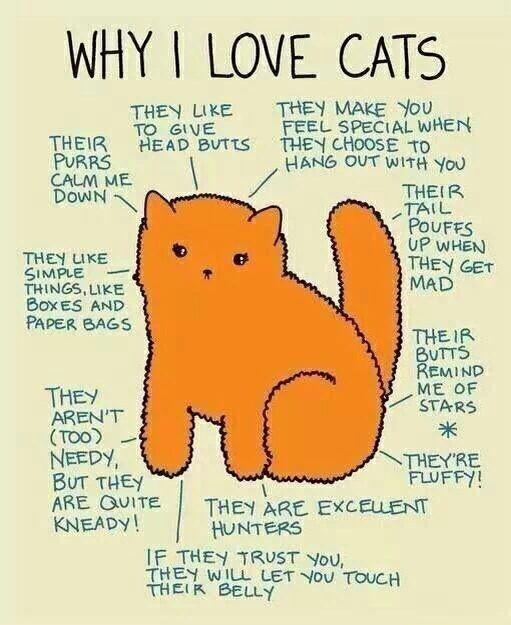 Why I love cats :3