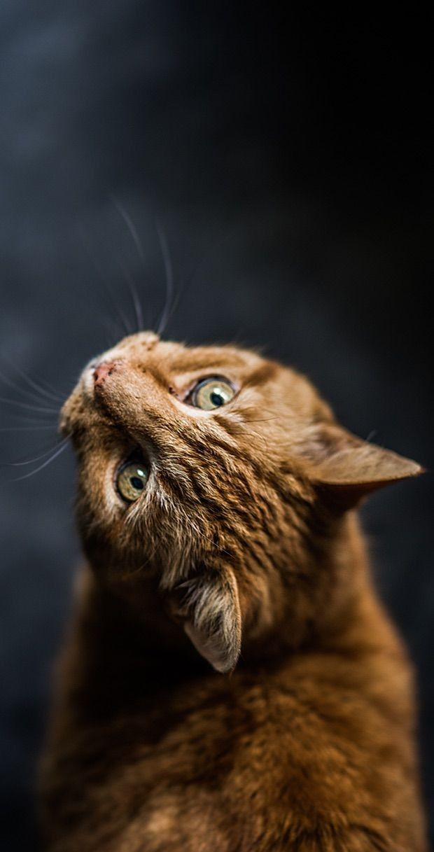Pin By Goritsa Lyubomirova On Katzen Beautiful Cats Cute Cat Wallpaper Cute Dog Wallpaper Cool cat eyes wallpaper