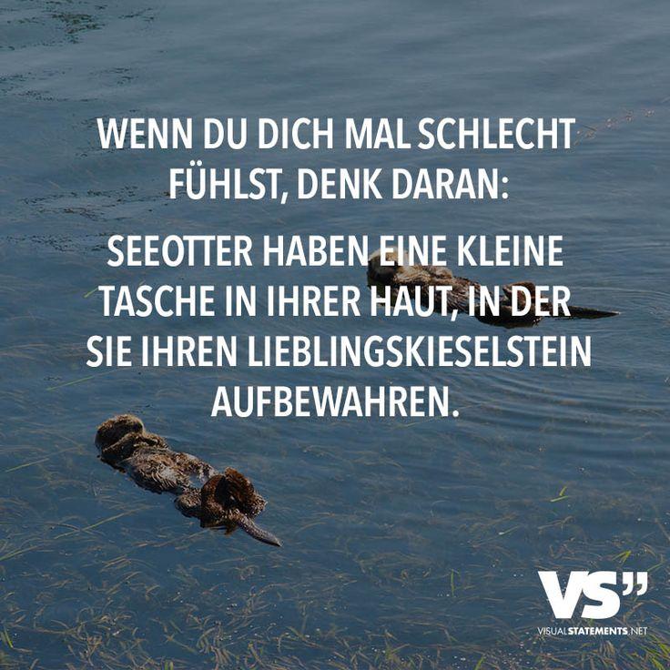Wenn du dich mal schlecht fühlst, denk daran: Seeotter haben eine kleine Tasche in ihrer Haut, in der sie ihren Lieblingskieselstein aufbewahren.