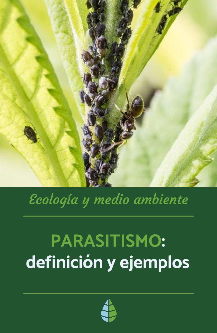 ejemplos de parasitismo en arboles