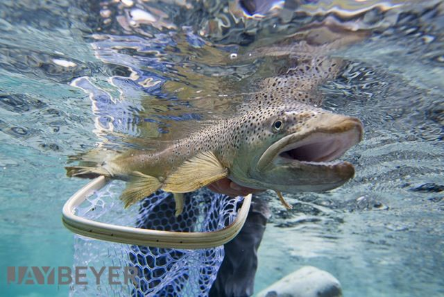 New Zealand catch & release