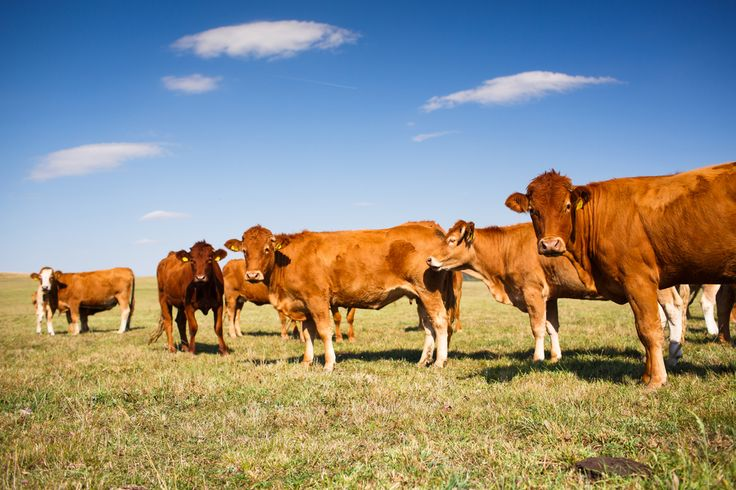Just add compost: How to turn your grassland ranch into a carbon sink | Grist