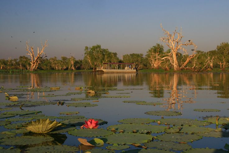Wetland Cruises - Corroboree Billabong (Darwin, Australia): Hours, Address, Tickets & Tours, Boat Tour Reviews - TripAdvisor