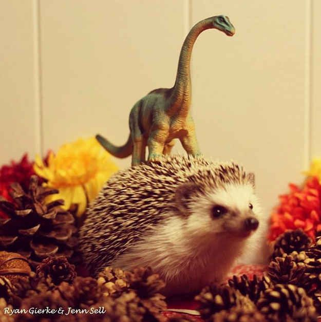 They're best friends with dinosaurs. At least that's what this photo seems to suggest   20 Enchanting Facts About Hedgehogs