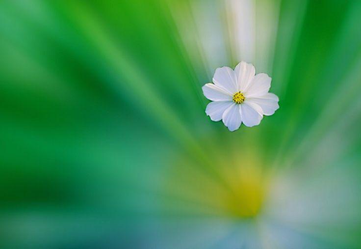 Aziz Nasuti Blog: A Flower In Dream!
