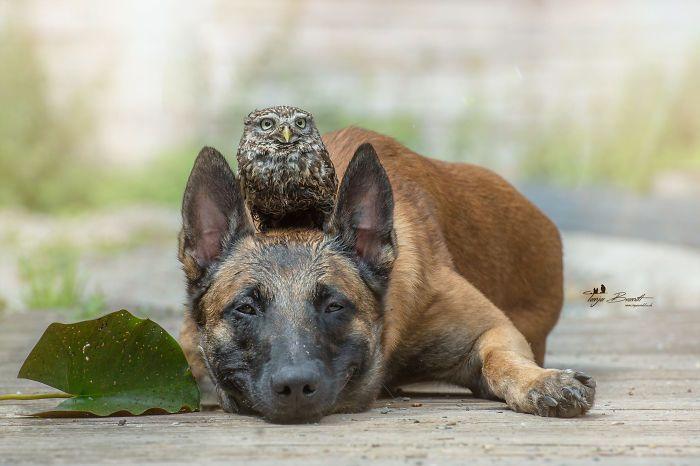 30+ Fotos del perro Ingo y sus amigos búhos que son lo único que necesitas ver hoy