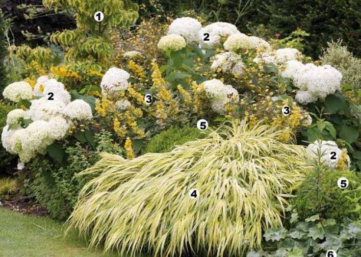 massif de printemps gardens hydrangeas and originals. Black Bedroom Furniture Sets. Home Design Ideas