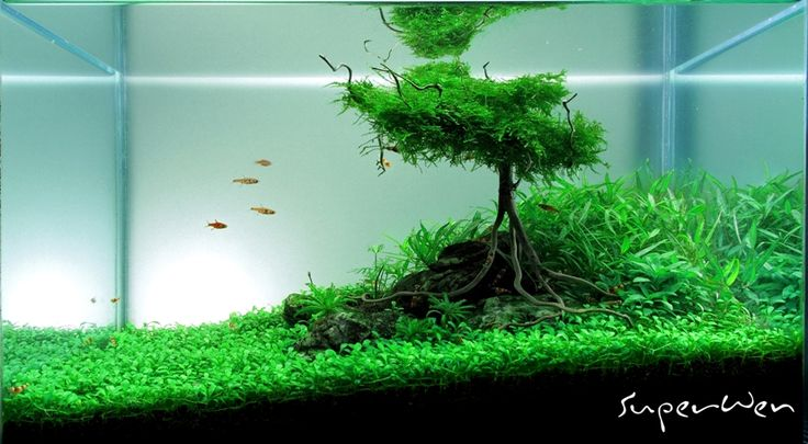 Aquascape By SuperWen AQUASCAPE Pinterest Tanks