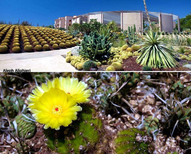 Cactimundo San Jose del Cabo