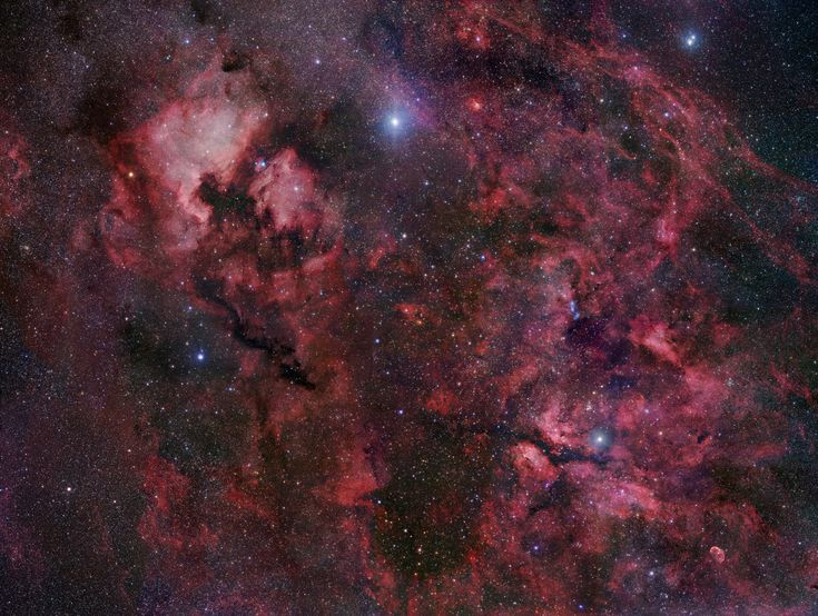 Cygnus crowded with stars and gas clouds, is also home to the dark, obscuring Northern Coal Sack Nebula, extending from Deneb (top center) toward the bottom center of the view. The reddish glow of NGC 7000, the North America Nebula, and IC 5070, the Pelican Nebula (upper left) and many other nebulae and star clusters are identifiable throughout the wide field. Deneb itself is the alpha star of Cygnus and is also found in 2 asterisms - the Northern Cross and the Summer Triangle.