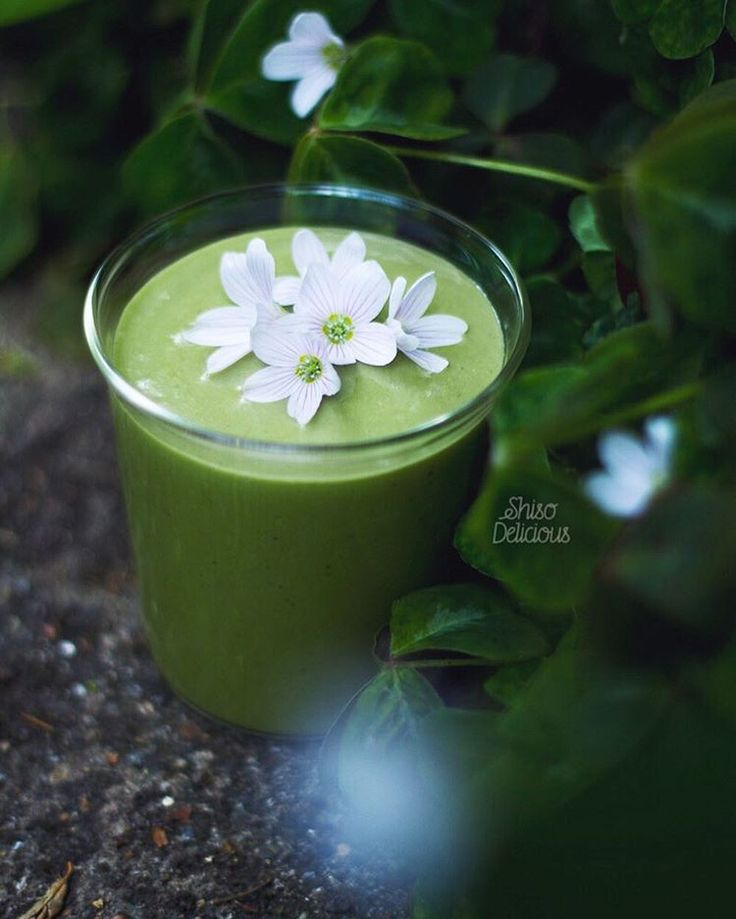 Smoothie or lily pond? You decide .. But there's a lot of magic happening in the garden right now✨ I've just started a little celebration for my #ShisoDelicious40K- details a couple of posts back!  Matcha & young coconut smoothie with wood sorrel flowers. These flowers are beautifully lemony, as are their leaves. 2 small bananas, 1 big chunk of young coconut flesh (thawed from frozen), a squeeze of lemon, pinch vanilla and about 1/2 tsp ceremonial grade matcha. #enchantedgarden 庭の新し...