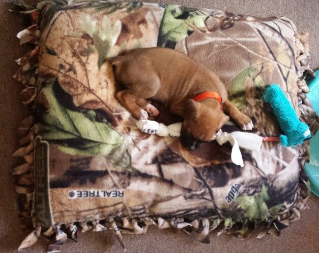 DIY dog bed *One yard fleece from fabric store *Two standard pillows *Cut sides and tie MY PUPPY LOVES IT!!!